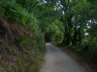 Bosque en las vegas del rio Bermaña